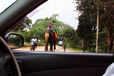 1 SFUMATURASigirya elefante utilizzato come mezzo di tarporto copia