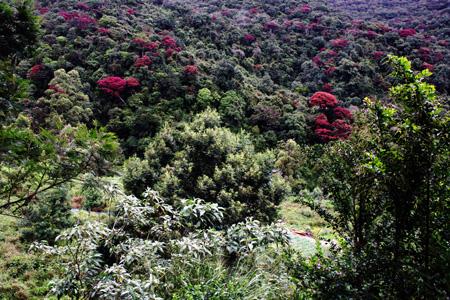 Fantastici colori della foresta vergine che stiamo velocemente distruggendo.
