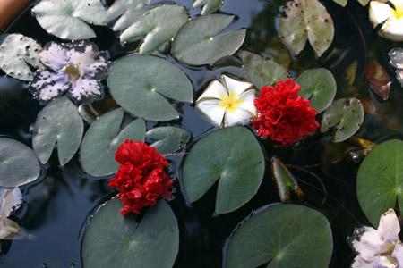 1 fiori nell'acqua copia