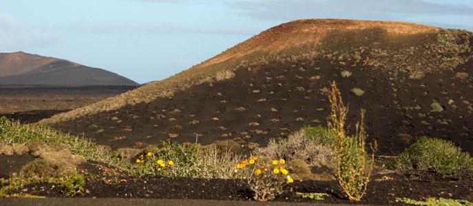 Lanzarote ciuffi di primavera tra i vulcani ok