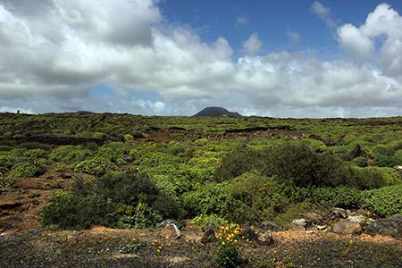 Lanzarote panorama primaverile; quando i vulcani spenti si ricoprono di verde.