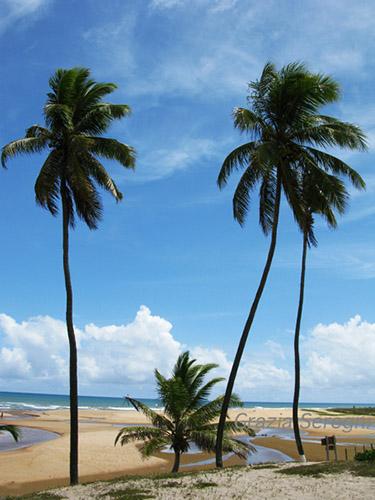Brasile, spiaggia.
