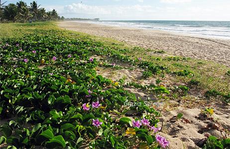 Brasile, Guarajuba, passeggiata lungo il mare e fiori spontanei.