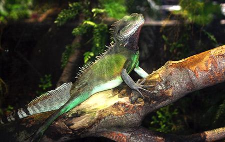 LONDRA animali iguana IMG_6964