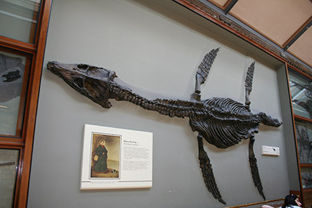 Londra, Museo di Scienze Naturali, dinosauro.