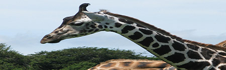 animali giraffe IMG_1006