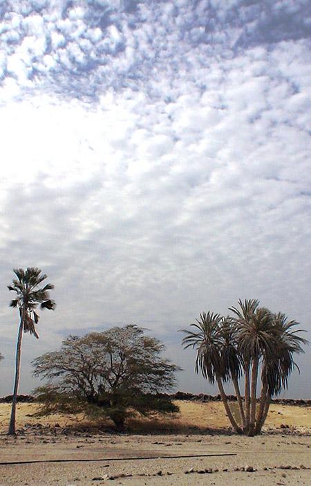 boa vista cielo e palme