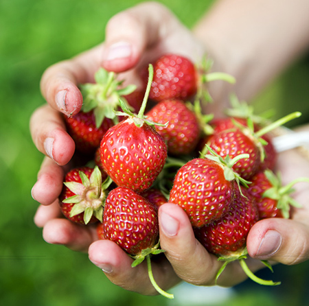 ulf_huett-nilsson-strawberries-2372