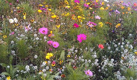 Norvegia fiori 1