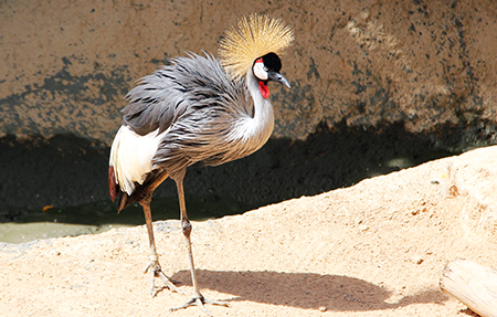 zoo uccello animali