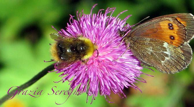 Fiori-farfalla-ape