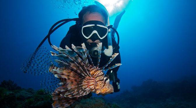 VACANZE E SALUTE – Mediterraneo rischio invasione velenoso pesce scorpione