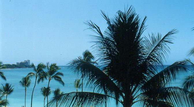 Palme mare 672 panorama esotico