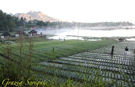 Bali Lago Batur risaie n