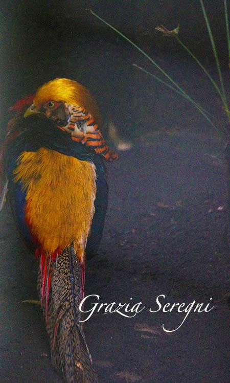 Bali Uccello del Paradiso 2 x