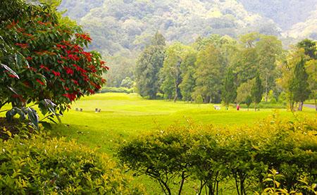 Bali golf prati