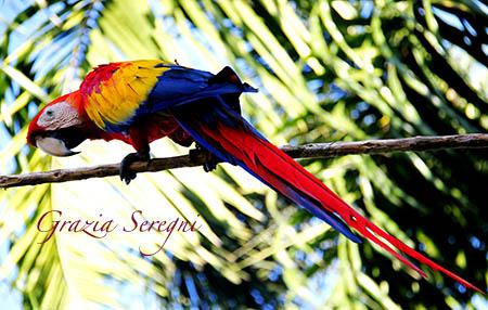 Bali pappagallo Ara uccello 9m