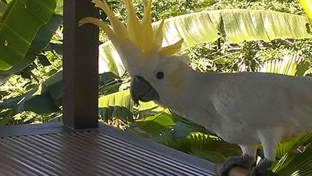 Bali resort wayan pappagallo