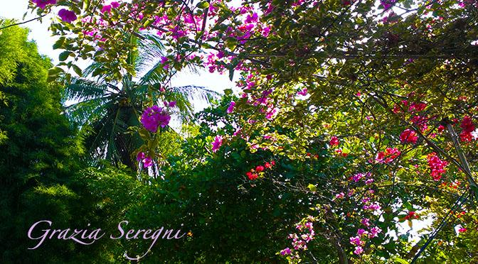 Lago di Como eventi – Fiori e piante spontanee nell'erbario – Villa Carlotta