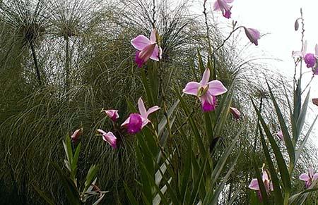 Panama Boquete giardino fiori IMAG4641