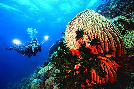 Filippine 450 sub IMG_4816_atlantisfotofestival