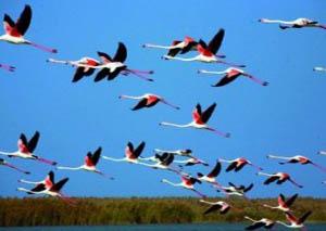 flamingo_natura Azerbaijan animali varie