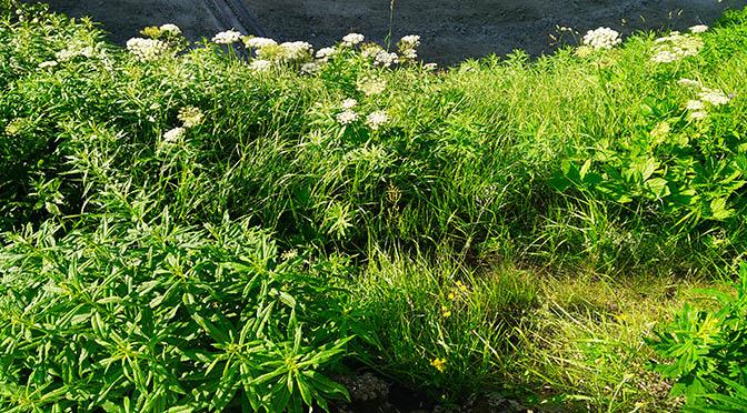 fiori 672 verde giardino montagna IMG_20150702_081442