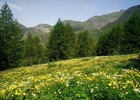 montagna 450 lago Ritom Svizzera IMG_20150703_103730