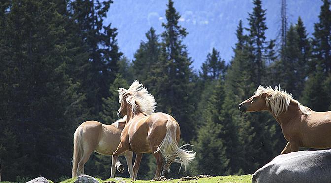 bolzano equitazione il paradiso dell equitazione a due ForCavalli Bolzano