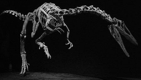 dinosauri-450-padova-2016-mostra-da-argentina