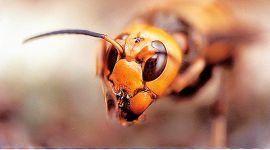 Ecologia un aereo di api ...