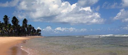 ESOTICO ridotto spiaggia oceano palme