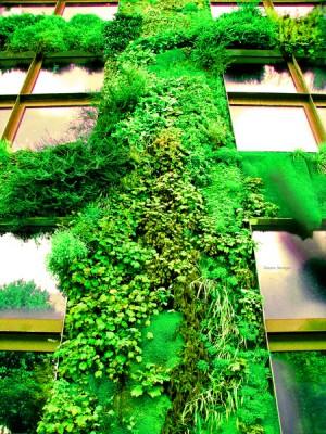 verde sulle pareti verde verde