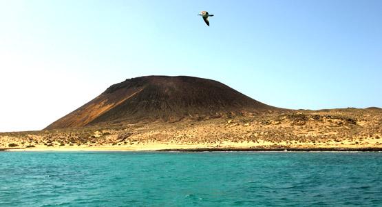 La Graciosa 1 gabbiano e il vulcano originale