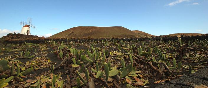 Lanzarote panorama.