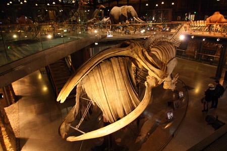 Museo di storia naturale risalente incontri vedove 60