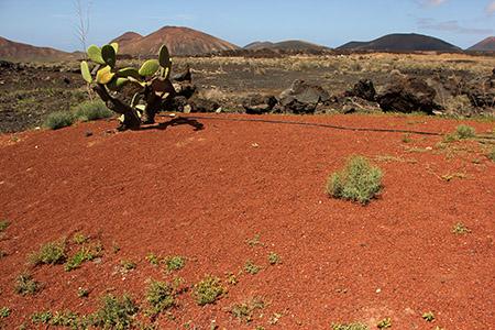 Rosso vulcani cactus