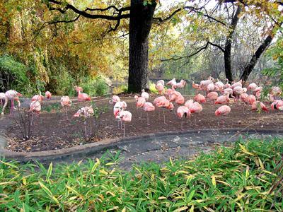 """Lo zoo di Berlino è famoso in tutto il mondo, anche per il film """"I ragazzi dello zoo di Berlino""""."""