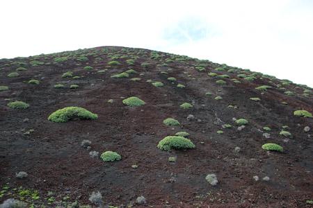 Cespugli di primavera sul vulcano spento.
