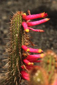 Jardin de Cactus.
