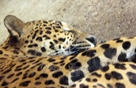 CR ANIMALI8IMG_5085