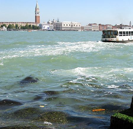 VE alghe da Giudcca IMG_0092