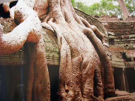 Cambogia alberi gbsl