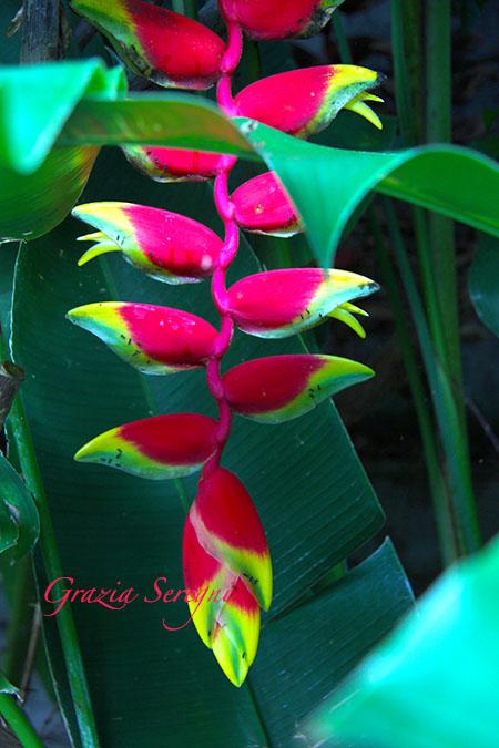 bali 450 fiore gvb