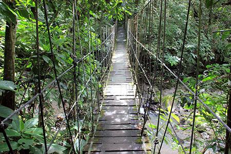 PANAMA foresta passerella IMG_0318