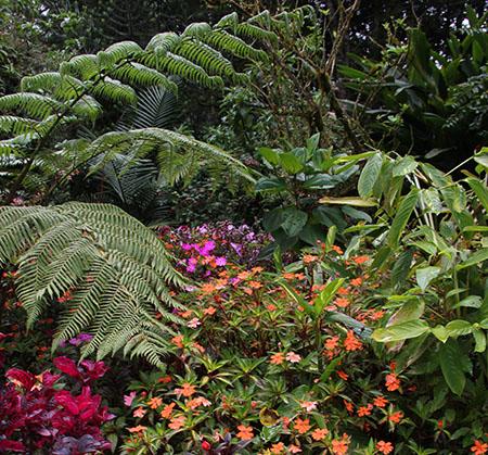PANAMA orchidee fiori IMG_0563