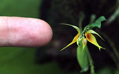 PANAMA orchidee fiori IMG_0711