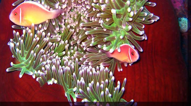 mare pesci reef_snorkeling_diving_pemuteran
