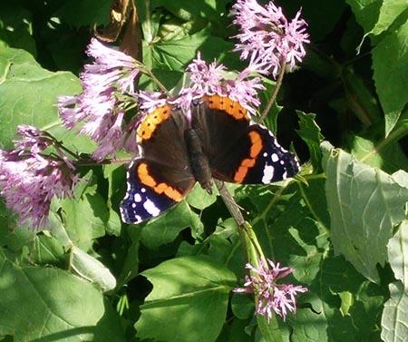 Lago ritom farfalla 450