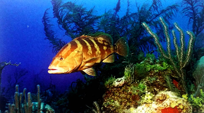 AL CALDO IN INVERNO – VACANZE SICURE – CUBA anche per il viaggiatore più esigente – Isole paradisiache fuori dai soliti itinerari